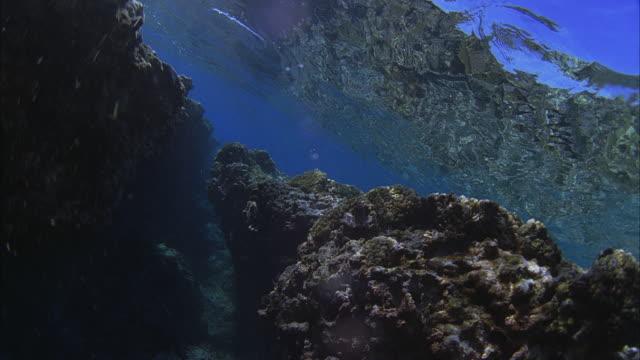 slo mo pov swimming at coral reef / moorea, tahiti, french polynesia - dykarperspektiv bildbanksvideor och videomaterial från bakom kulisserna
