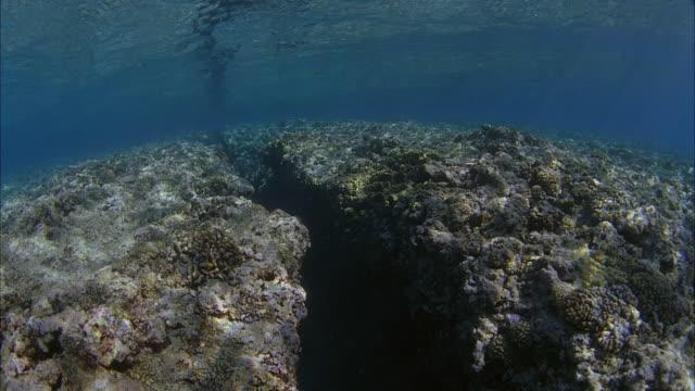 slo mo pov swimming at coral reef / moorea, tahiti, french polynesia - moorea stock videos & royalty-free footage