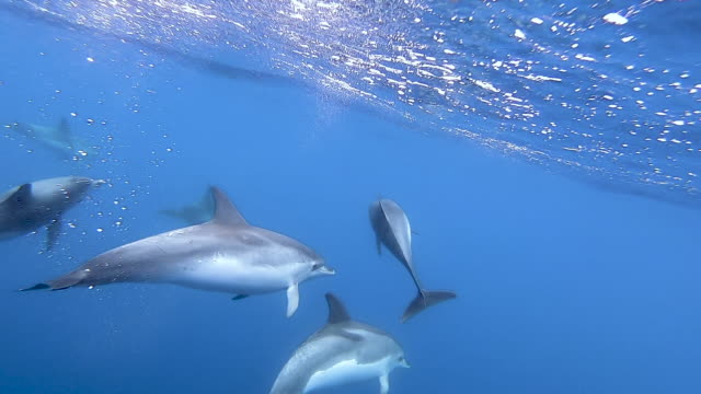 swimming dolphins in slow motion - portugal stock videos & royalty-free footage