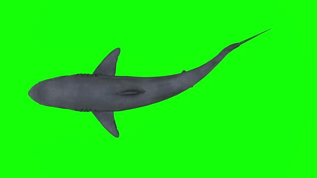 vídeos de stock, filmes e b-roll de nadando grande tubarão branco na tela gren. o conceito de temas animais, peixes, vida selvagem, jogos, animação 3d, curta-metragem, filme, desenho animado, orgânico, chave croma, animação de personagem, elemento de design, loopable, recorte, chroma k - shark