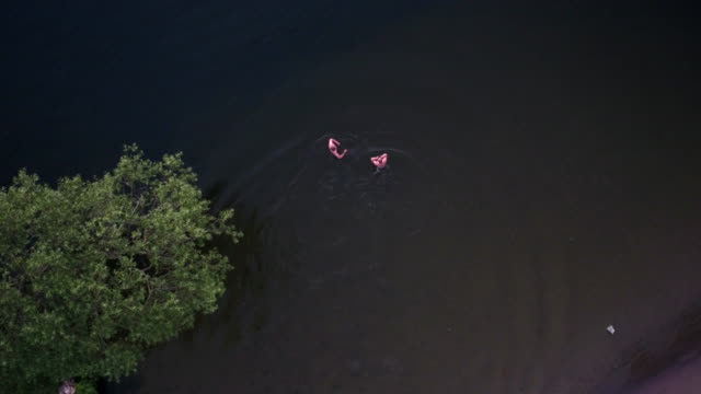 aerial: swimming in a lake - washing stock videos & royalty-free footage