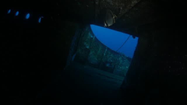 vídeos de stock, filmes e b-roll de mergulho no naufrágio, boga kubu (4k) bali (norte - ponto de vista de mergulhador