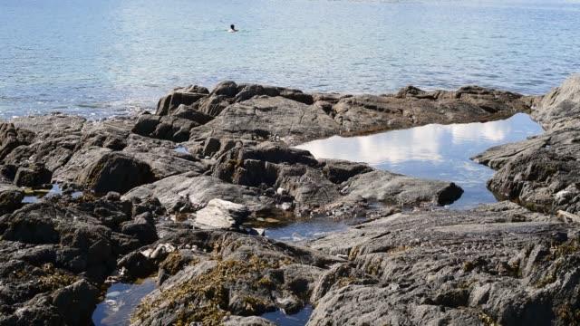 swimming off a rocky coastline at pointe de sehar, brittany. - david johnson stock videos & royalty-free footage
