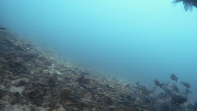 Swimming past a school of fish