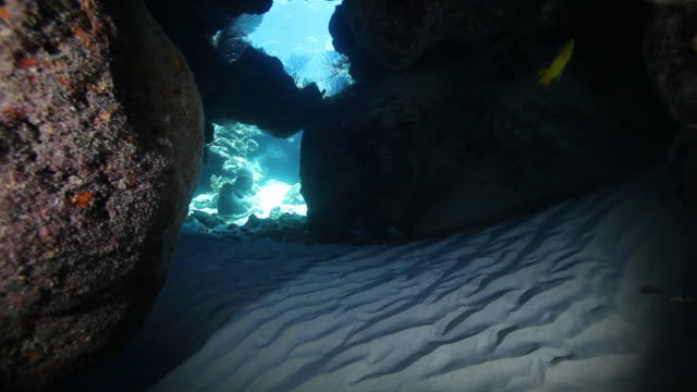 vidéos et rushes de swimming through seafloor reef, pov - roc