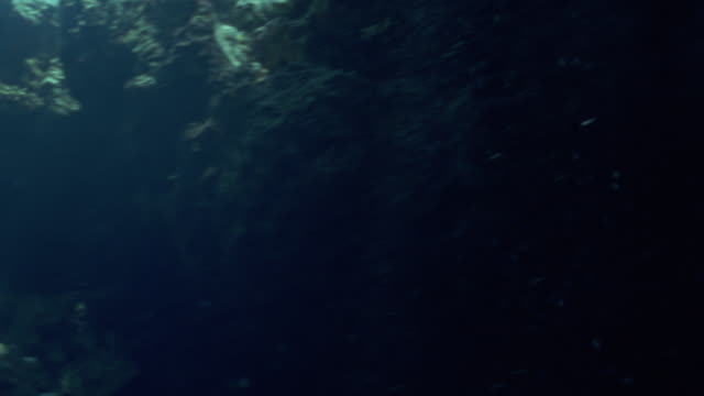 ms swimming through shoal of glass fish / egypt - glass fish stock videos & royalty-free footage