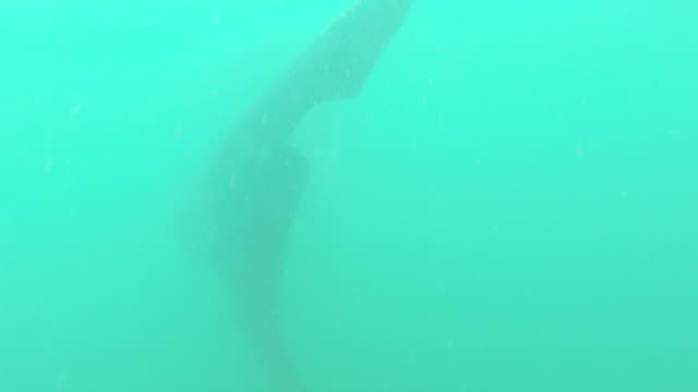 swimming with whale shark in philippines, pov - james whale stock-videos und b-roll-filmmaterial