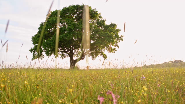 slo mo swinging in the middle of the meadow - rope swing stock videos & royalty-free footage