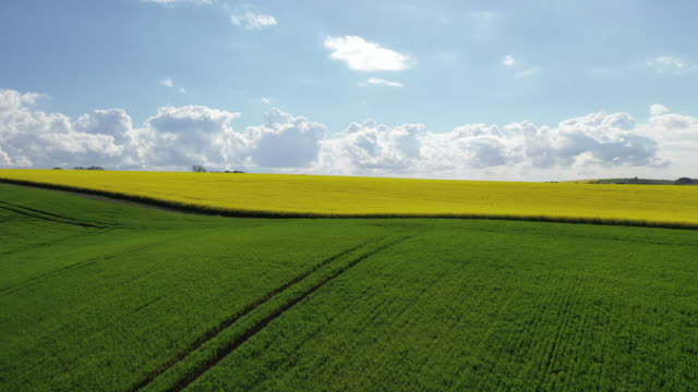 swinoujscie oilseed rape field scenery / swinoujscie, poland - horizon over land stock videos & royalty-free footage
