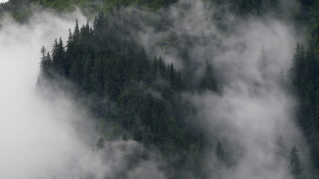 swirling fog in forest - time lapse - evergreen stock videos & royalty-free footage