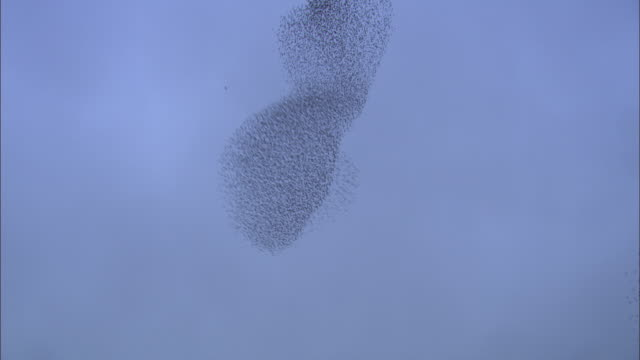 swirling starling flock at dusk, rome, italy. - vogelschwarm stock-videos und b-roll-filmmaterial