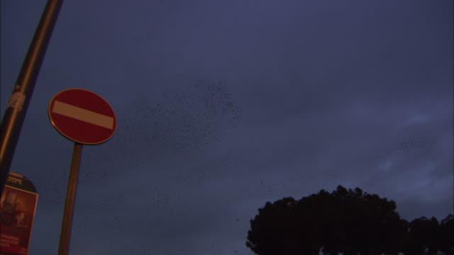 vídeos y material grabado en eventos de stock de swirling starling flock at dusk, rome, italy. - autobús