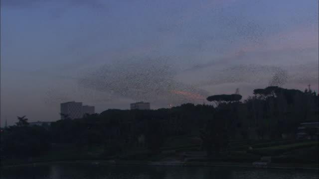 vidéos et rushes de swirling starling flock at dusk, rome, italy. - etourneaux