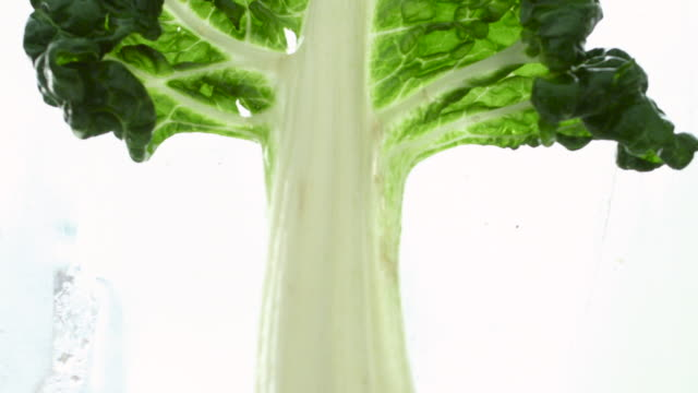 Swiss Chard Tree