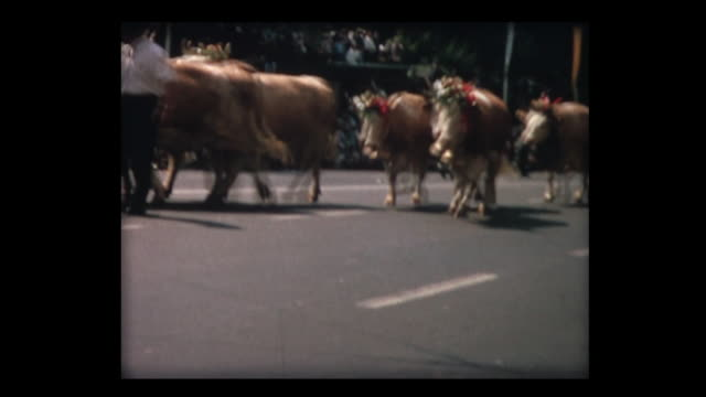 1964 swiss parade tradesmen and live stock on the street - festwagen stock-videos und b-roll-filmmaterial