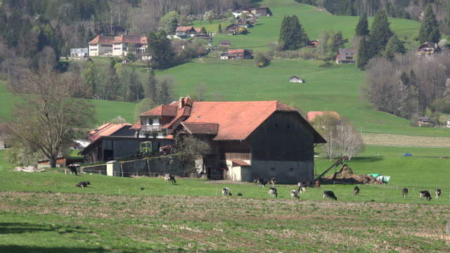 switzerland la gruyere farmhouse with cows and train - barn stock videos & royalty-free footage