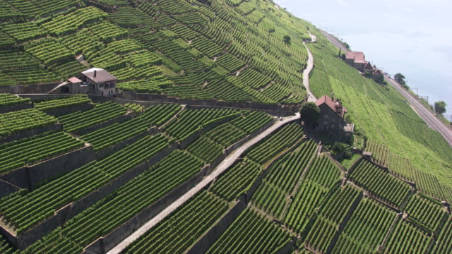 switzerland : vineyards near lake geneva - weinberg stock-videos und b-roll-filmmaterial