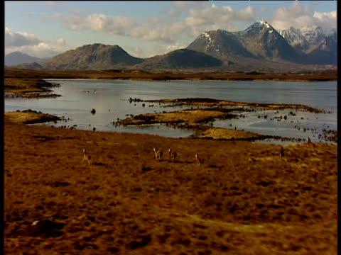 vídeos y material grabado en eventos de stock de swooping track over running herd of red deer scottish highlands - erial