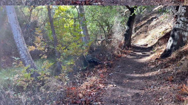 sycamore trail in fall color, lower end from meadow, pinnacles national park, san benito county, california, 4k video - oak tree stock videos & royalty-free footage
