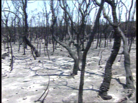 australia new south wales sydney national park totally burnt out area with river gv burnt out forest area with ash covered ground and blackened... - paletto da cricket video stock e b–roll