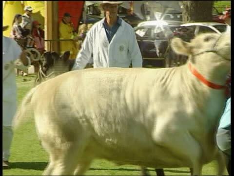 vídeos de stock e filmes b-roll de sydney ext gv band along at annual country show tcms animals hooves along gv group of smiling teenage girls gv cattle paraded along by owners gv... - arquiteta