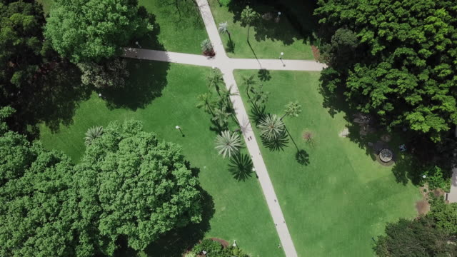 sydney hyde park - natural parkland stock videos & royalty-free footage