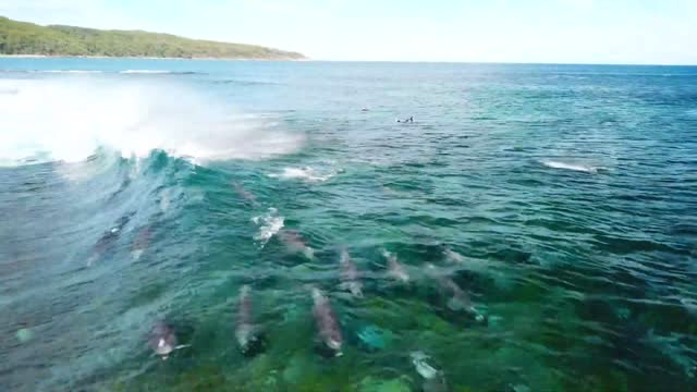 sydney resident shaun petersen shared this amazing drone footage to https://www.instagram.com/p/bvyit2xn1gg/ instagram on april 3 showing of a group... - dolphin stock videos & royalty-free footage
