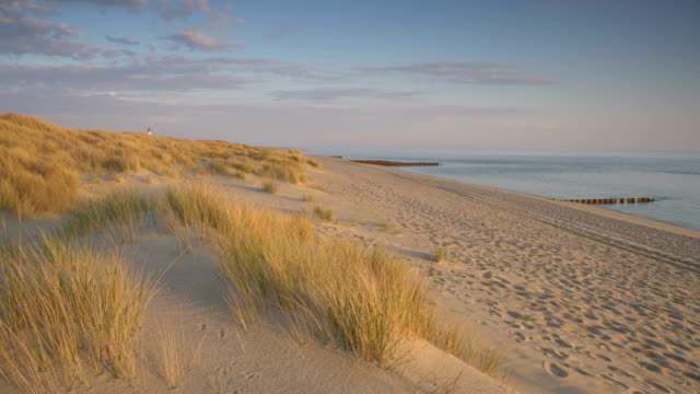 sylt at sunrise - marram grass stock videos & royalty-free footage