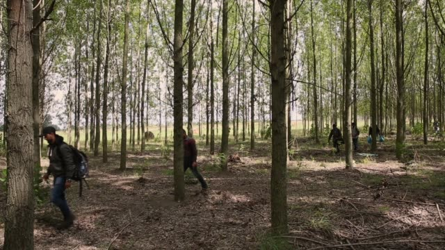 Syrian men from Damascus try to evade the Hungarian police by sneaking through a forest close to the Serbian border on September 8 2015 in Morahalom...