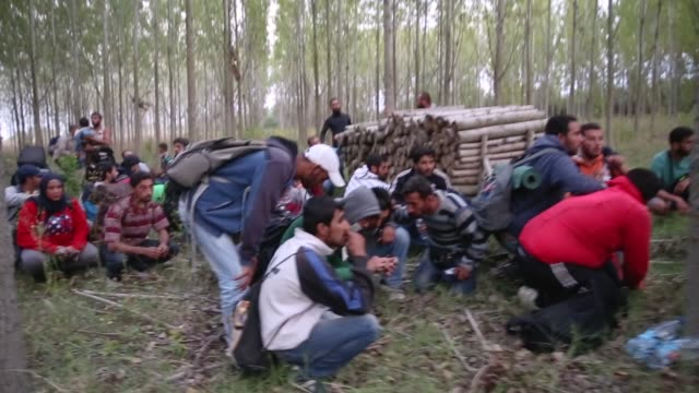 syrian men from damascus try to evade the hungarian police by sneaking through a forest close to the serbian border on september 8, 2015 in... - 国境点の映像素材/bロール