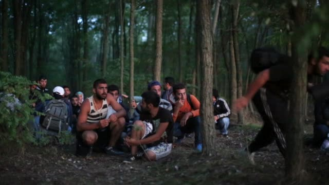 syrian men from damascus try to evade the hungarian police by sneaking through a forest close to the serbian border on september 8 2015 in morahalom... - land stock-videos und b-roll-filmmaterial