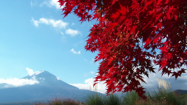 m't fuji and autumn leaves - autumn leaf color stock videos and b-roll footage