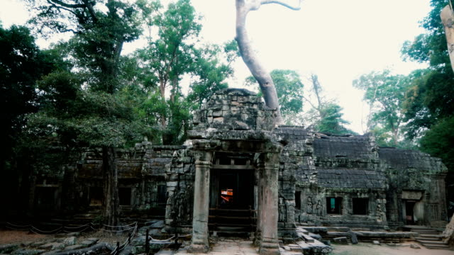 ta  prohm temple at sunrise - angkor wat stock videos and b-roll footage