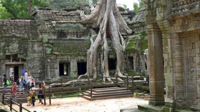 ta prohm temple - cambodia stock videos and b-roll footage