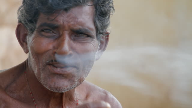 vídeos de stock, filmes e b-roll de tabacco was introduced to india in the 1600s - parte do corpo animal