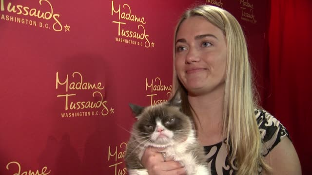 interview – tabatha bundesen on what grumpy cat would do as president on how grumpy cat reacted to her wax figure on other projects at grumpy cat... - wax stock videos & royalty-free footage