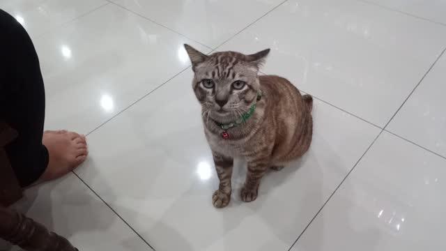 vídeos de stock, filmes e b-roll de gato tabby, gato doméstico bonito - domestic animals