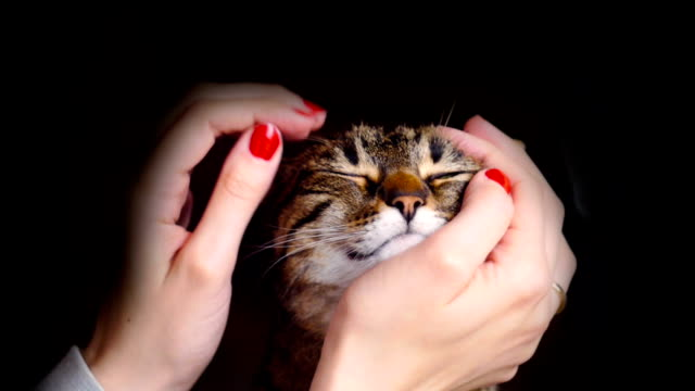 tabby cat getting pet - stroking stock videos & royalty-free footage