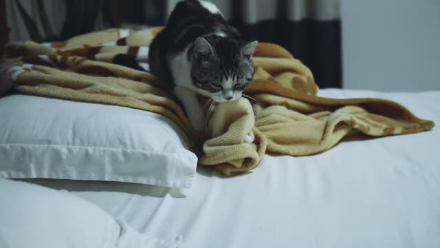 vídeos y material grabado en eventos de stock de tabby gato amasando manta en la cama - manta ropa de cama