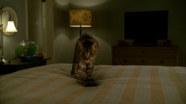 A tabby cat on a bed looks around as it lies on a remote control.