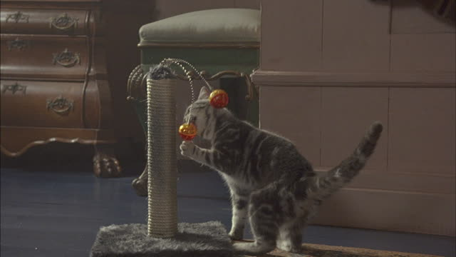A tabby cat plays with a toy in the living room.