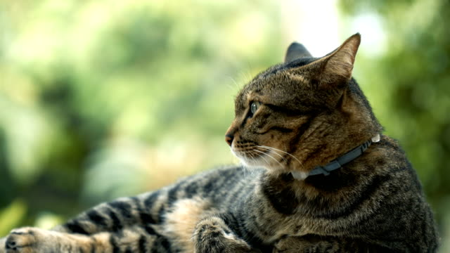 tabby cat turn face to camera - curiosity stock videos & royalty-free footage