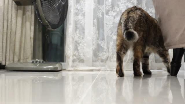 vidéos et rushes de tabby cat - être debout