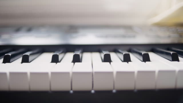 vídeos y material grabado en eventos de stock de a tabby kitten having fun playing with keyboard. close-up - actuación espectáculo