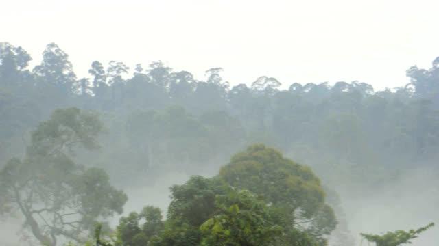 tabin rainforest - ボルネオ島点の映像素材/bロール