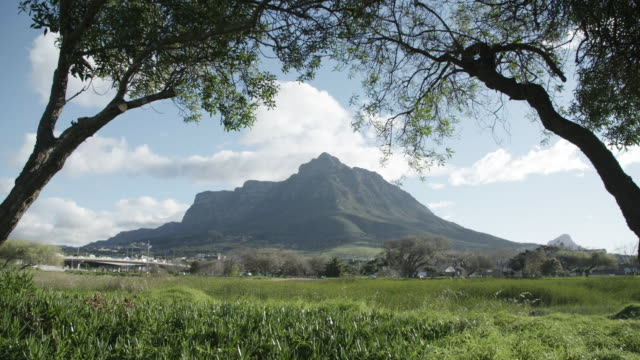 Table Mountain through trees in South Africa, slow motion