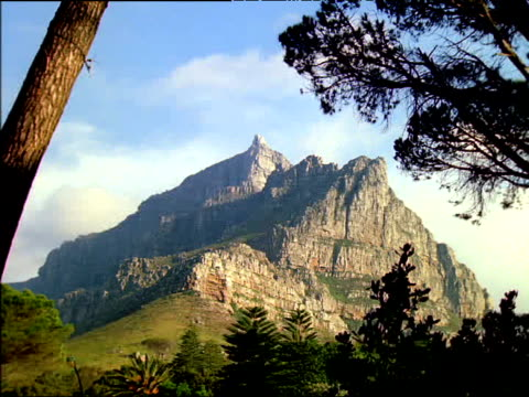 table mountain towers above trees, south africa - penisola video stock e b–roll