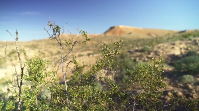 春先のアリゾナ砂漠のテーブル山地。フロントからバックへの遅いフォーカスシフトとビデオ。 - ネバダ州クラーク郡点の映像素材/bロール