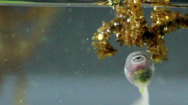 vídeos y material grabado en eventos de stock de tadpoles  - anfibio
