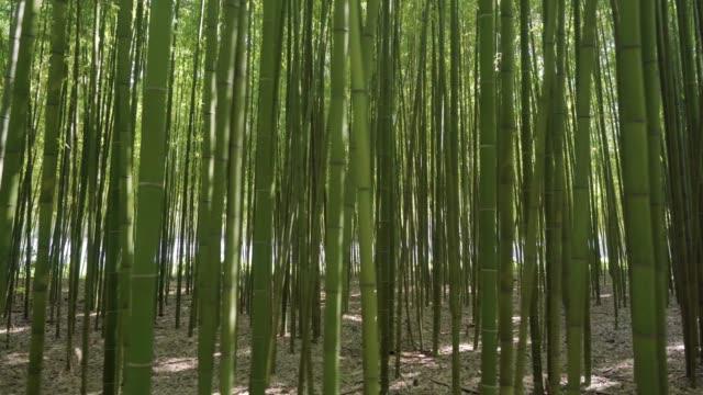 taehwa river seepri bamboo grove - 竹点の映像素材/bロール